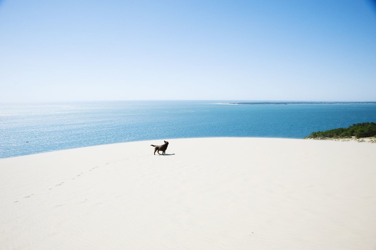 Summer Dogs Dune du Pyla, France. My dog Amber running down this 110mtr high sand dune hoping to find water to cool down. Clearly she is enjoying the race to the water, I guess I'm losing this race... Nikon Dog France Summer Zerofotografie.nl OpenEdit Travel Photography Enjoying Life Labrador