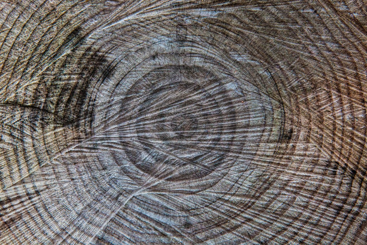 Backgrounds Beautifully Organized Circles Circles In Circles Close-up Nature Lover Nature Photography Nature_collection Textures And Surfaces Tronco Trunk Wood - Material Wooden Texture Nature Beauty In Nature Natural Pattern EyeEm Nature Lover Eye