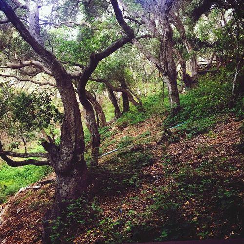 Nature Trees Avila Beach CA