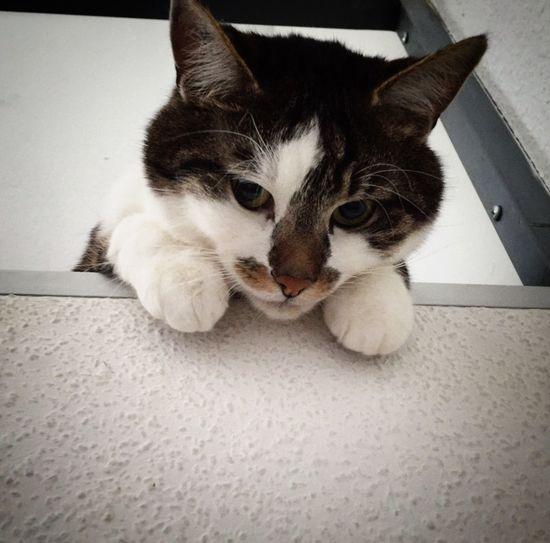 Love my baby Lovemycat Cat♡ Catlove ❤