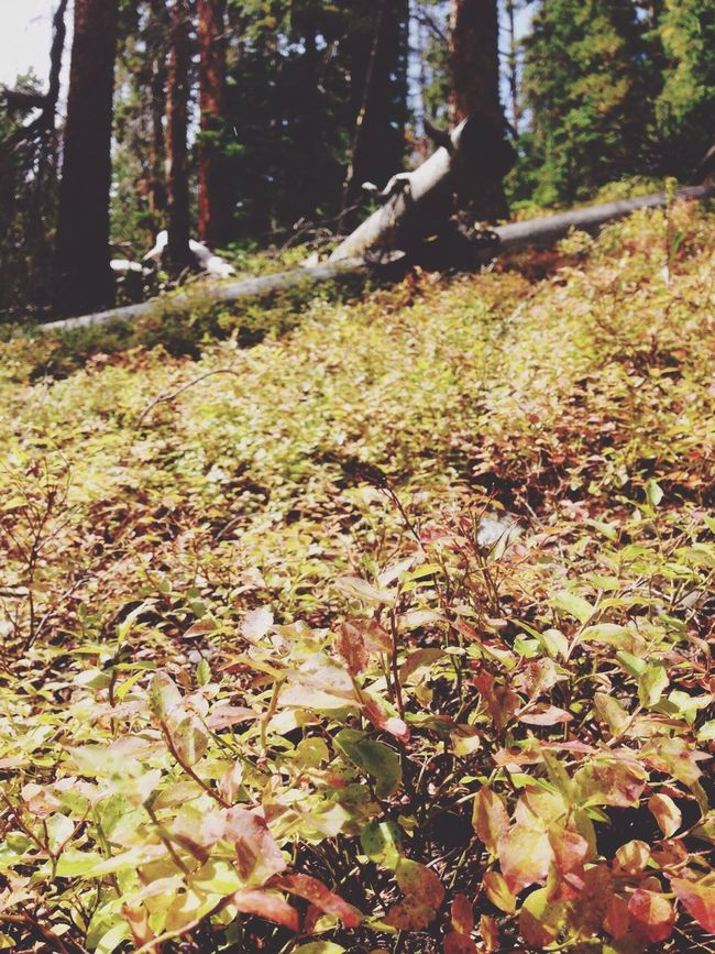 The leaves are already changing! I can see autumn already🍂 Autumn Forest Tranquility WoodLand Coal Creek Beauty In Nature Fallen First Eyeem Photo