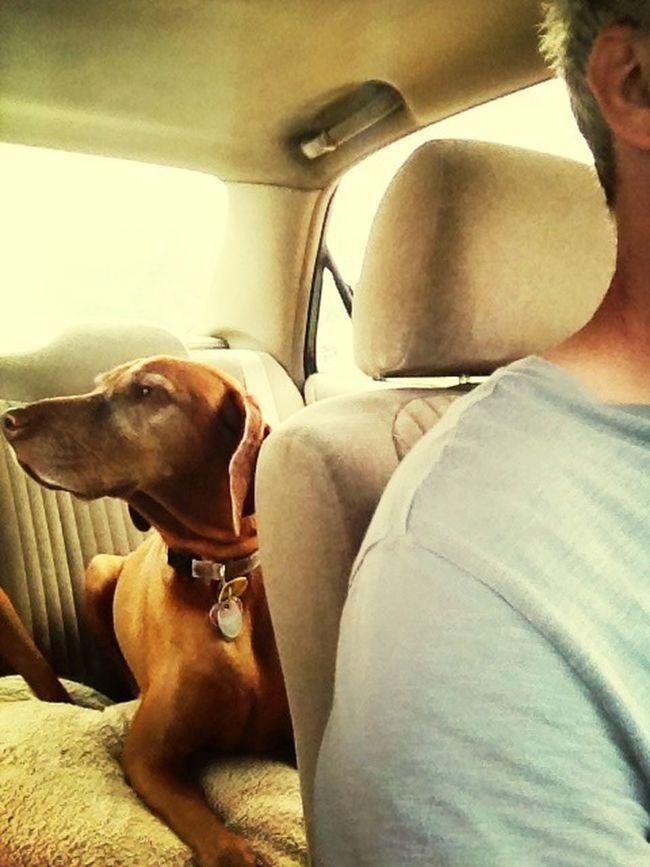 June 2013 Backseat Diaries