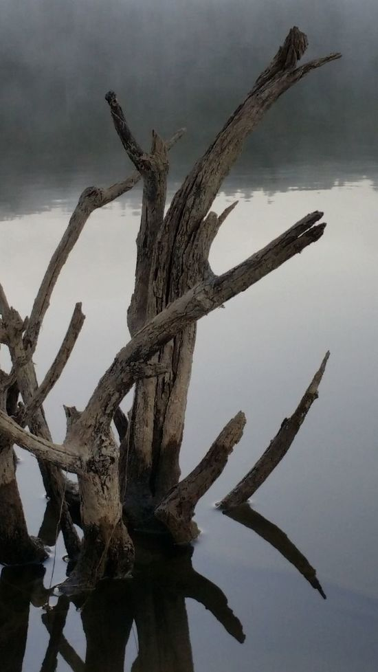 Outdoors Scenics Good Morning Outdoor Pictures Lakeview Sunrise Fishing Arkansas Arkansas_ozarks Arkansas, USA Arkansas Beautiful Nature_collection Lake Drift Wood  Driftwood Beach Camping Lake Fishing Tranquility Reflection Lake Water Lake View Check This Out