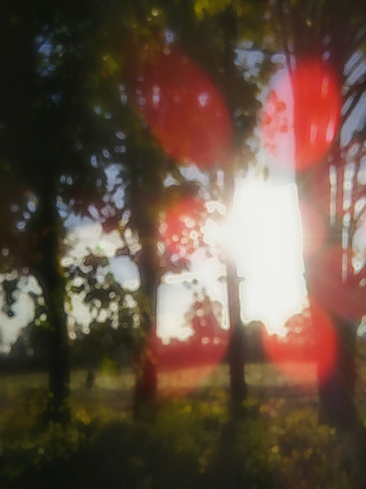 Sunrise_Collection Sun Coming Up Open Edit For Everyone Be Still My Heart Check This Out Nature_collection Nature Photography Trees Tree Lover Blur Beautiful Blur Trees Sun And Sky Outdoor Photography Color Palette Birds Eye View Eyeemphoto EyeEm Gallery Showcase August Essence Of Summer Focus On Foreground Focus Focus On Background Unfocused So What
