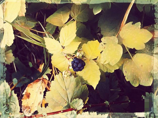 Fall ,early signs,fruit Growth Plant Berrys