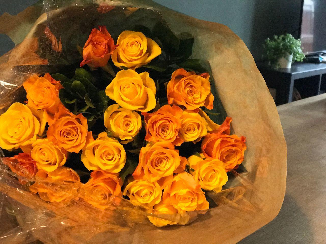 Rose - Flower Nature Flower Freshness Happy 愛アムステルダム 街道をゆく三十五 カメラ好きな人と繋がりたい