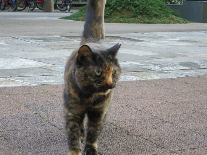 Cat Cat Lovers Cat Walking Day Domestic Animals Domestic Cat Nature No People One Animal Outdoors Portrait Stray Cat