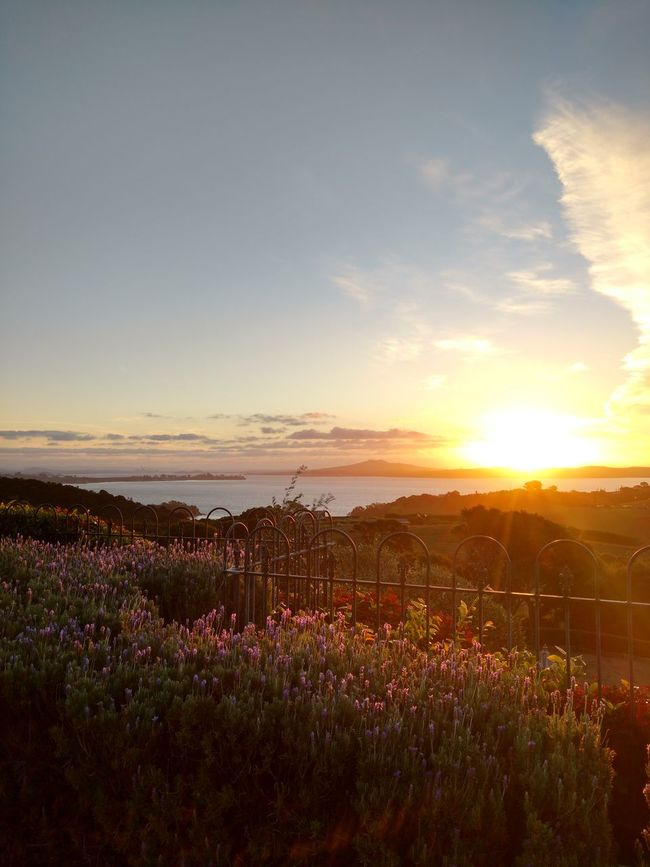 No Filter, No Photoshop Waiheke Island New Zealand Landscape Beauty In Nature Amazing View Sunny Day Flower Sunset Sky Auckland Skyline Ocean View Mudbrick Wineyard