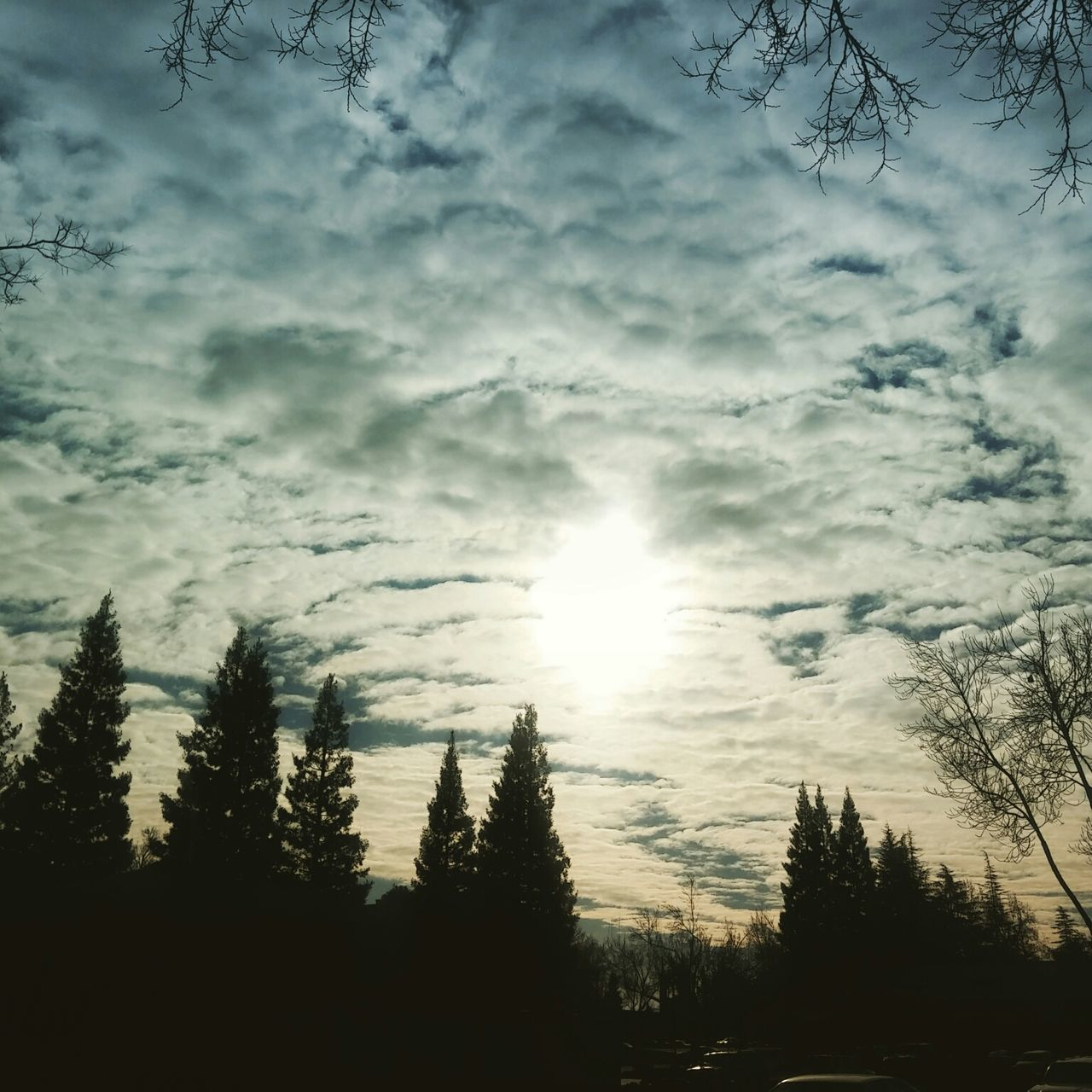 No Edit/no Filter Clouds And Sky Calisky Norcal Big Clouds Enjoying Life Trees And Sky From My Point Of View Sun Through The Clouds