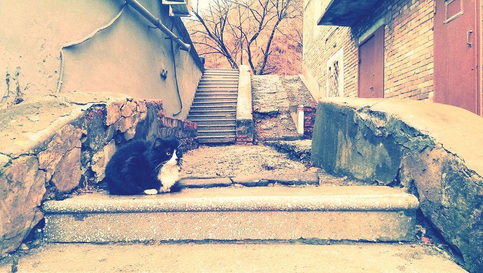 Wild cat Walking The Stairs