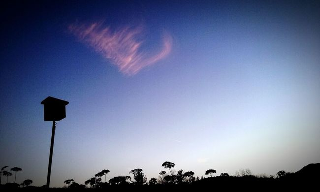 Watched over while cloud watchingAngel Or Devil? Sky Low Angle View Silhouette Horizontal No People Tranquility Night Outdoors Astronomy Beauty In Nature Angel Wings Blessed