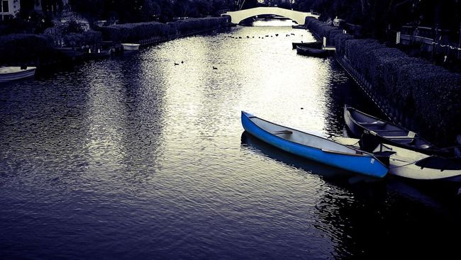 Venice Canals, CA Global EyeEm Adventure - Los Angeles Global EyeEm Adventure The Global EyeEm Adventure