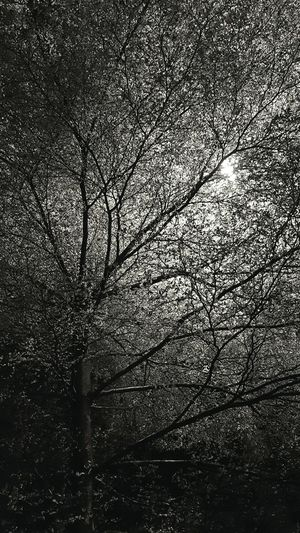 Lush No People Tree Growth Nature Low Angle View Outdoors Beauty In Nature My Point Of View The Week Of Eyeem Personal Perspective Fresh On Eyeem  Hello World Showcase November Check This Out Light And Reflection The Nature Of Eyeem EyeEm Nature Collection Tree Silhouette Nightshot Street Light & Tree Monochrome Black And White Photography