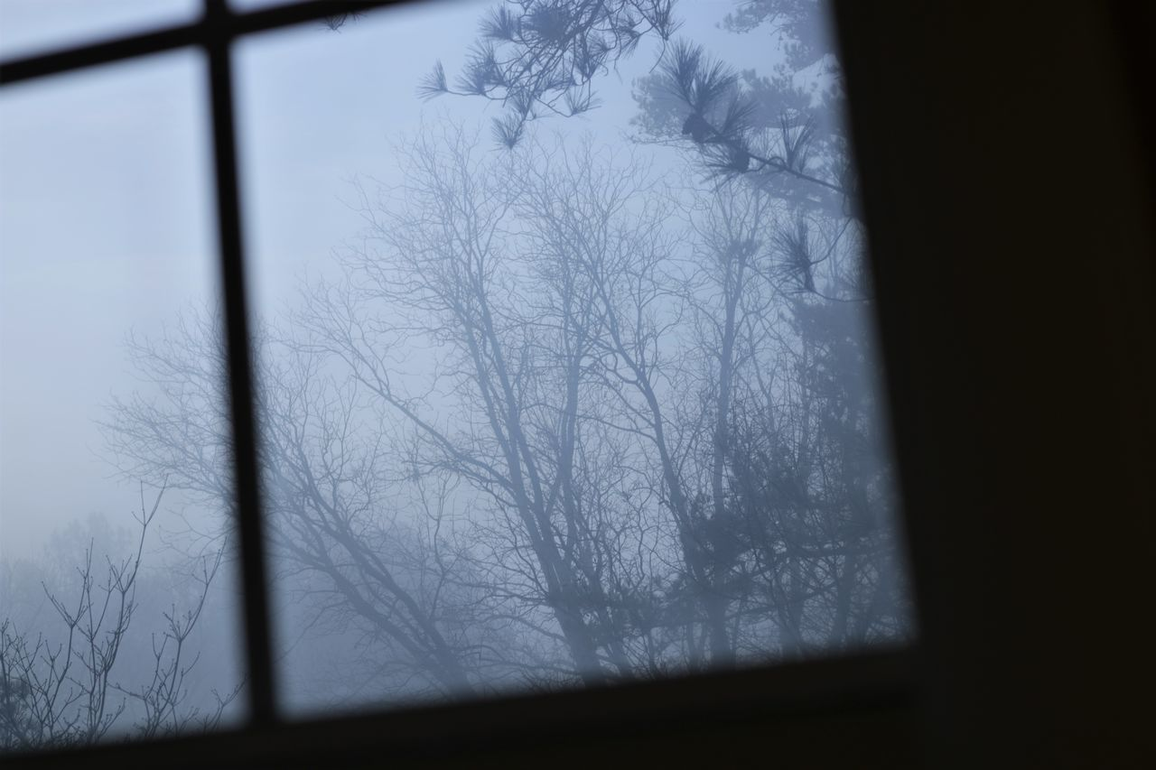 Abstract Bare Tree Branch Close-up Cold Temperature Day Indoors  Nature No People Sky Snow Tree Winter