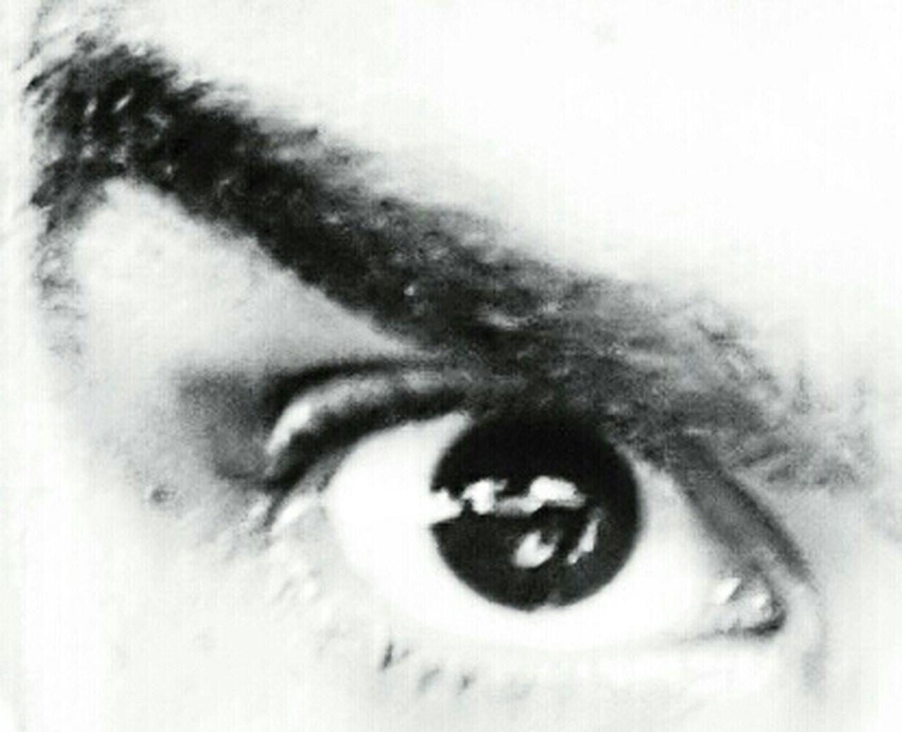 human eye, close-up, eyesight, looking at camera, eyelash, human face, young adult, eyeball, iris - eye, human skin, full frame, eyebrow, focus on foreground