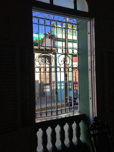 Cuba Window Indoors  Architecture Built Structure Railing Sunlight Day