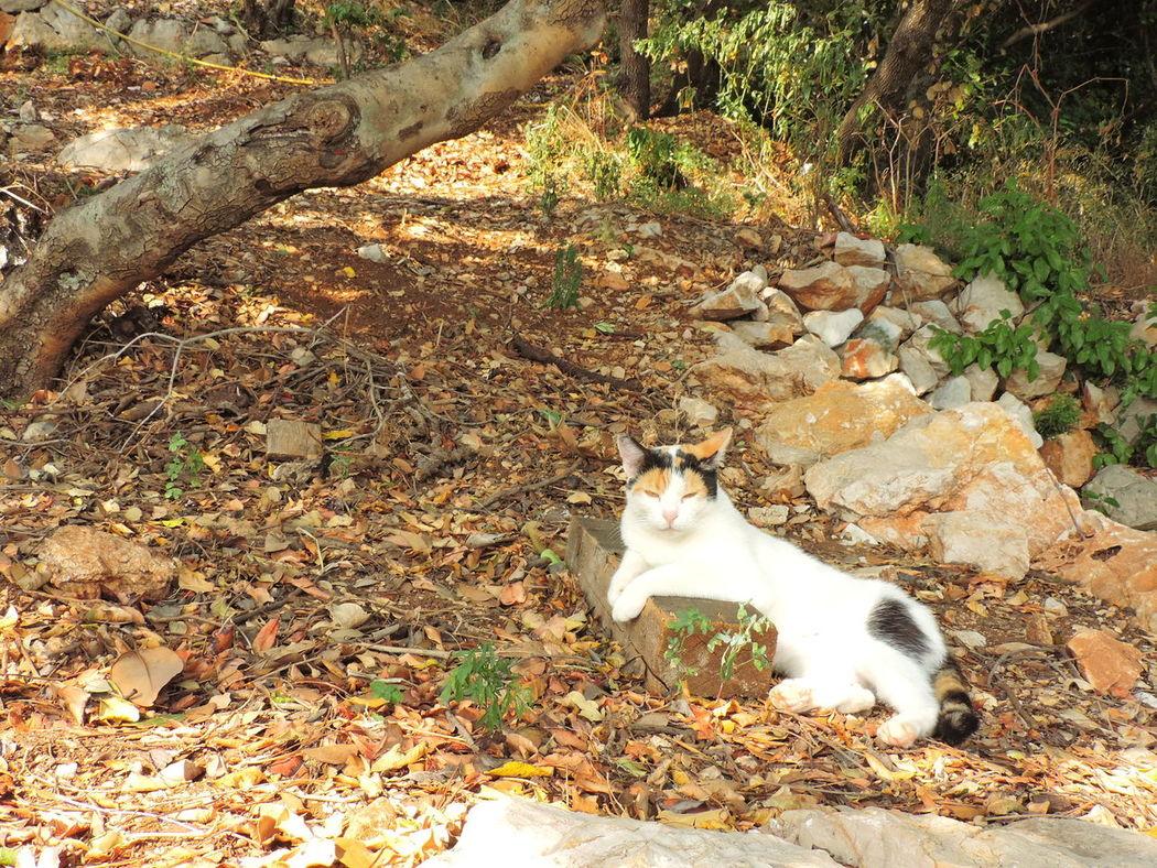 We met this cat somewhere in Lapad. Cat Chilling Cat Domestic Cat Feeline Relaxed Cat Tricolor Cat