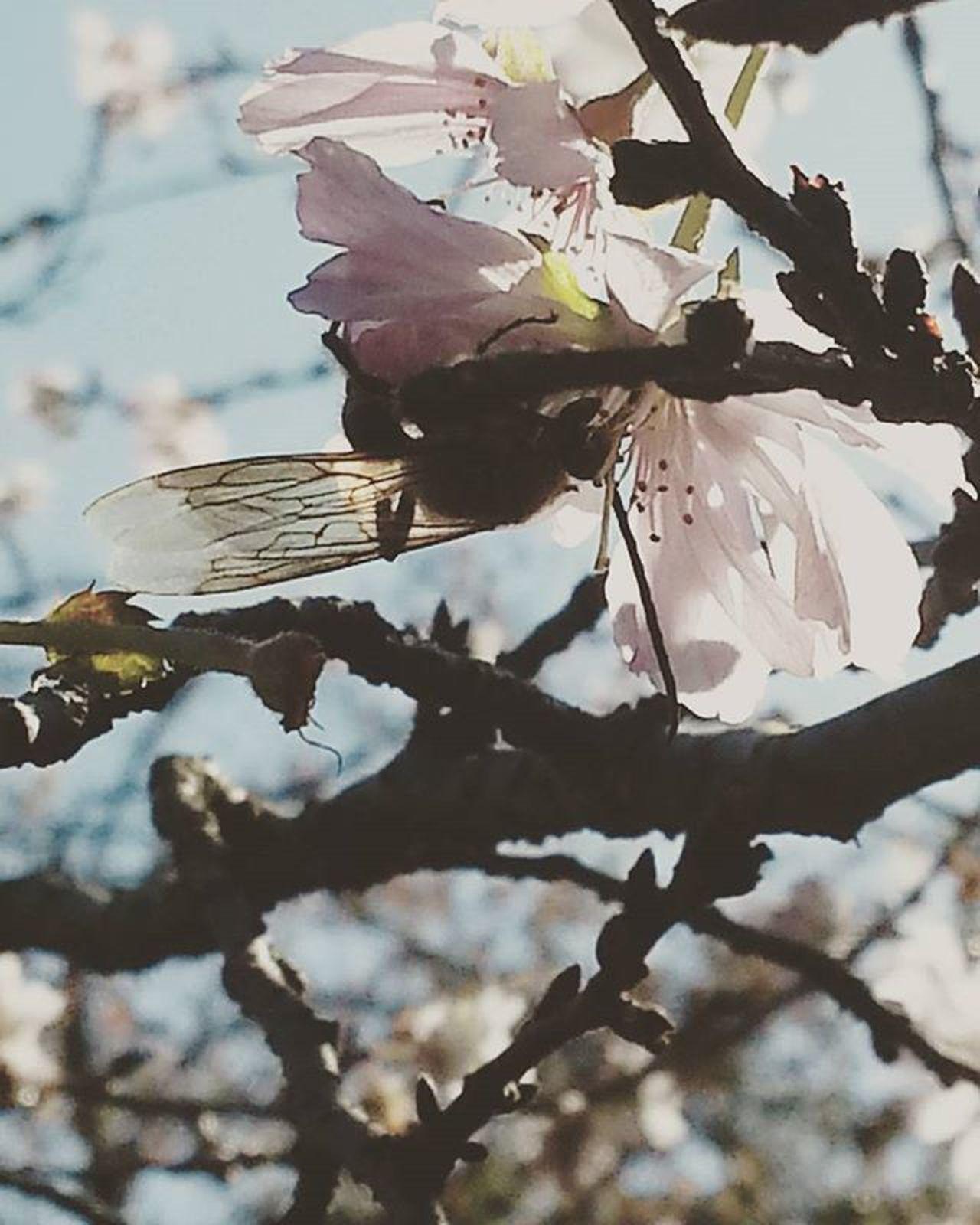 Saku Bee Flowers
