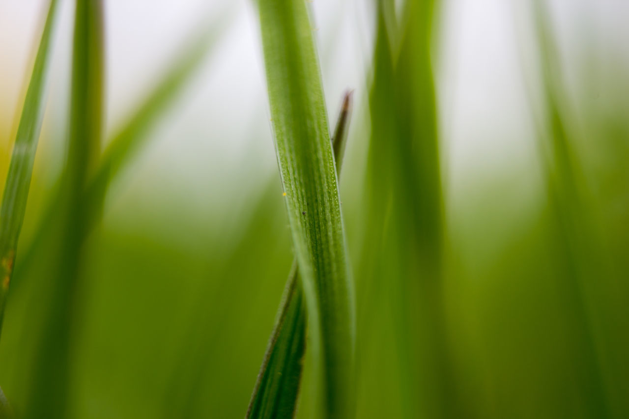 Beauty In Nature Grass Grass Macro Grass Stalk Green Color Growth Nature Maximum Closeness Focus On Foreground Focus On Macro Beauty Macro Photography Macro Grass Green Nature_collection Nature Photography Focus Focus Object