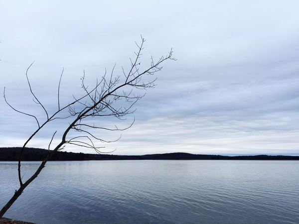 Minimalism Smooth Water Quiet Cold Showcase: February Alone Placid  Clouds And Sky Clouds Cloudy Day Cloudy Winter Lake Pond Minimal Simple Nature Trees Branches Mountains Landscapes With WhiteWall