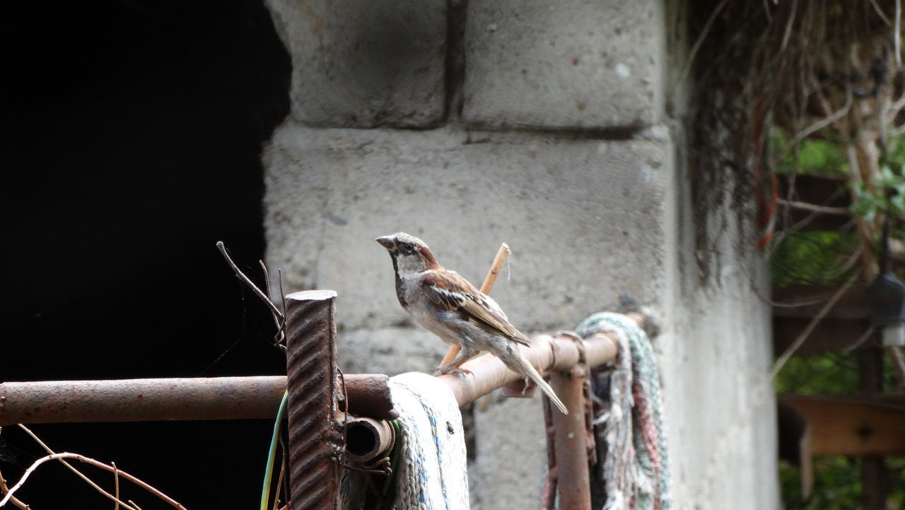 A bird in nature. Bird Bird Photography Birds In Nature Built Structure Close-up Concrete Day Flying Bird Life Nature No People No Words Outdoors Rust