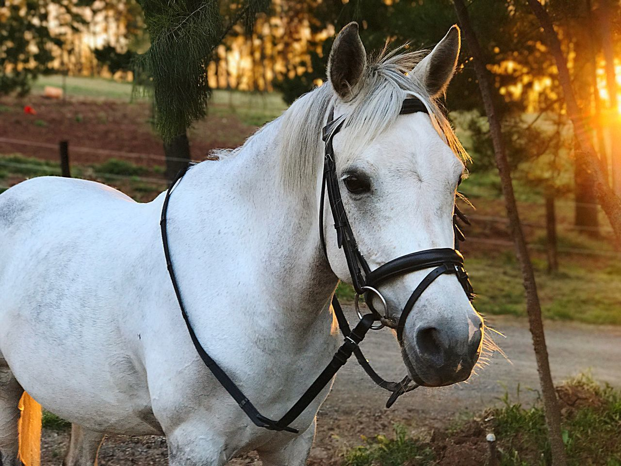 horse, one animal, domestic animals, animal themes, mammal, outdoors, tree, no people, day, horse cart, close-up, nature, grass