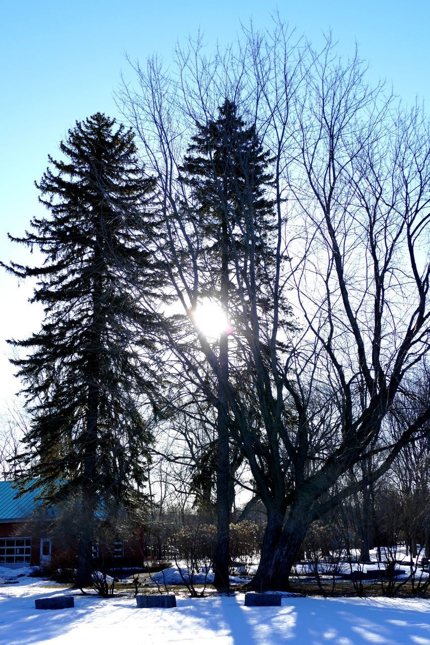 snow, winter, cold temperature, tree, cold, weather, nature, tranquility, sun, frozen, beauty in nature, bare tree, scenics, no people, tranquil scene, outdoors, branch, landscape, sky, day