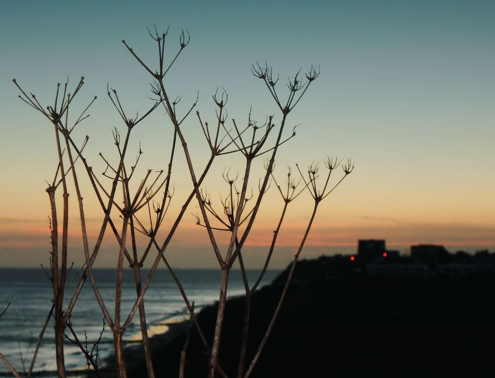 What's gone is gone, let it go... Tomorrow might bring new joys or new pains, but it also will bring new discoveries... Happynewyear С Новым Годом Cliff Shore Norfolk Uk берег Sky Seaside Seascape Море Sea утро Beautiful Sunrise Plants Alexanders Winter Dawn Lights