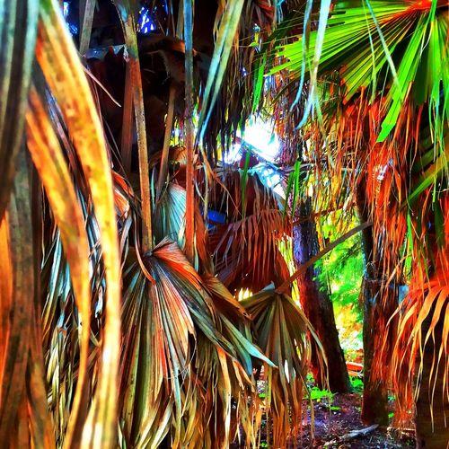 Avaré SP BRASIL ☀️🐎🇧🇷 My Smartphone Life EyeEm Nature Lover HDR EyeEm Gallery EyeEm Best Shots EyeEmBestEdits Sunset #sun #clouds #skylovers #sky #nature #beautifulinnature #naturalbeauty #photography #landscape EyeEm Avare Heaven Hello World
