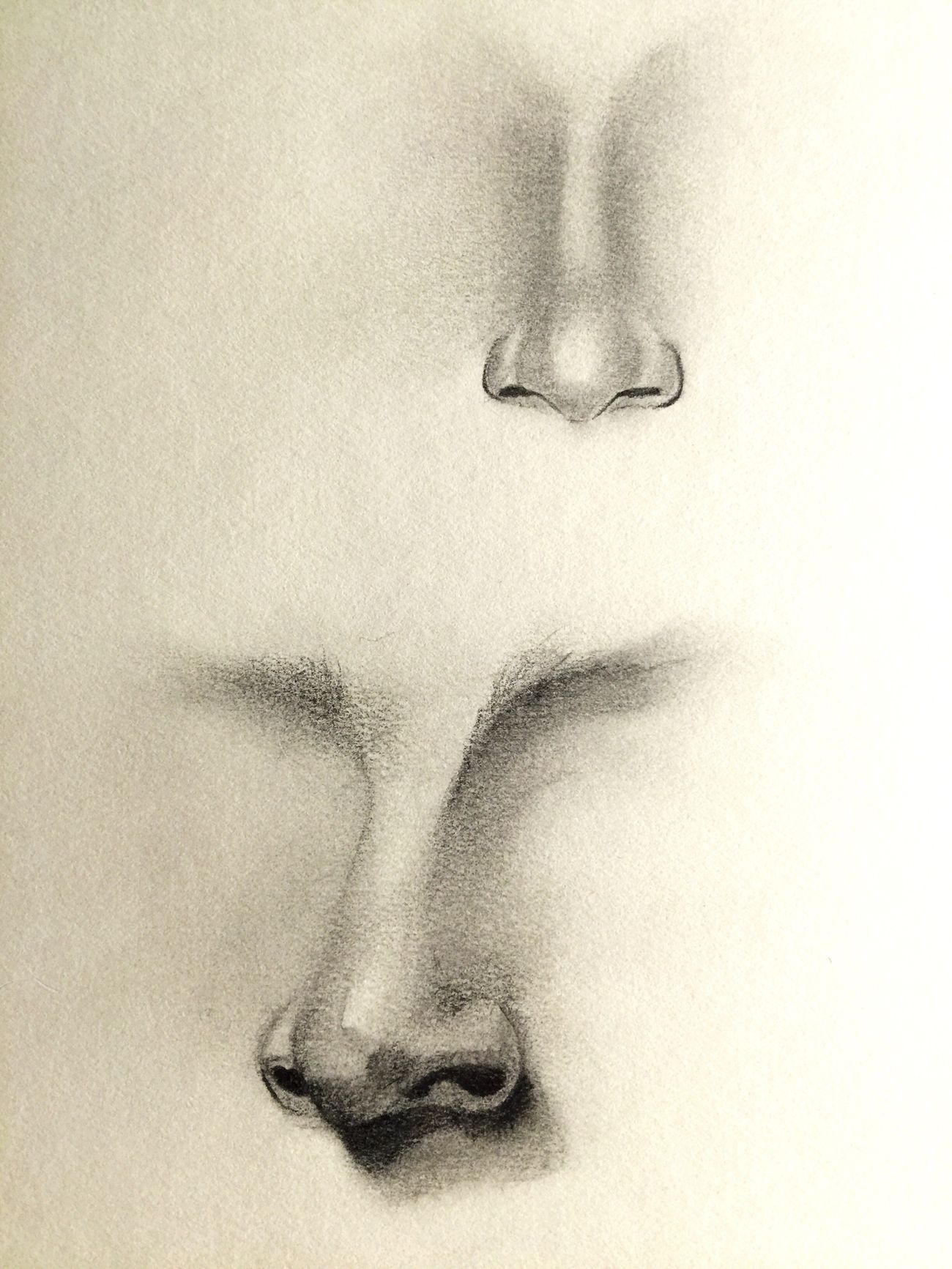 I haven't Doodled in years. Trying my hand at Noses