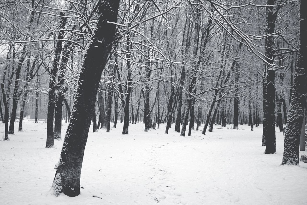 snow, winter, cold temperature, nature, tranquility, tree, weather, bare tree, beauty in nature, tranquil scene, outdoors, landscape, forest, tree trunk, scenics, day, frozen, no people
