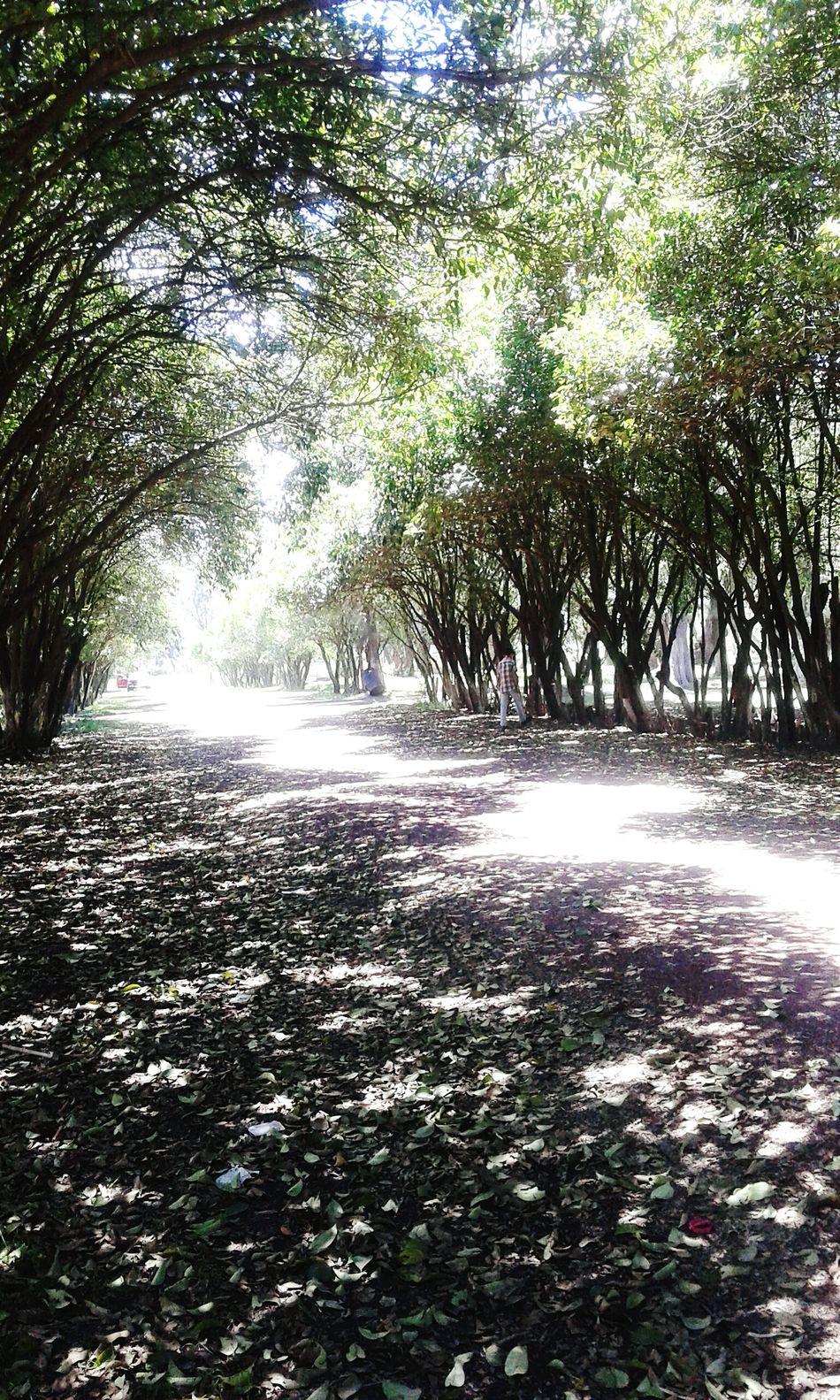 ♡ '''El amor... esa estrella de una sombra infinita aunque muera 5 veces...cien veces recucita.''''♡ In The Park The Sky The Natural Flowers... Trees...air.🐾⛅🌼🌹