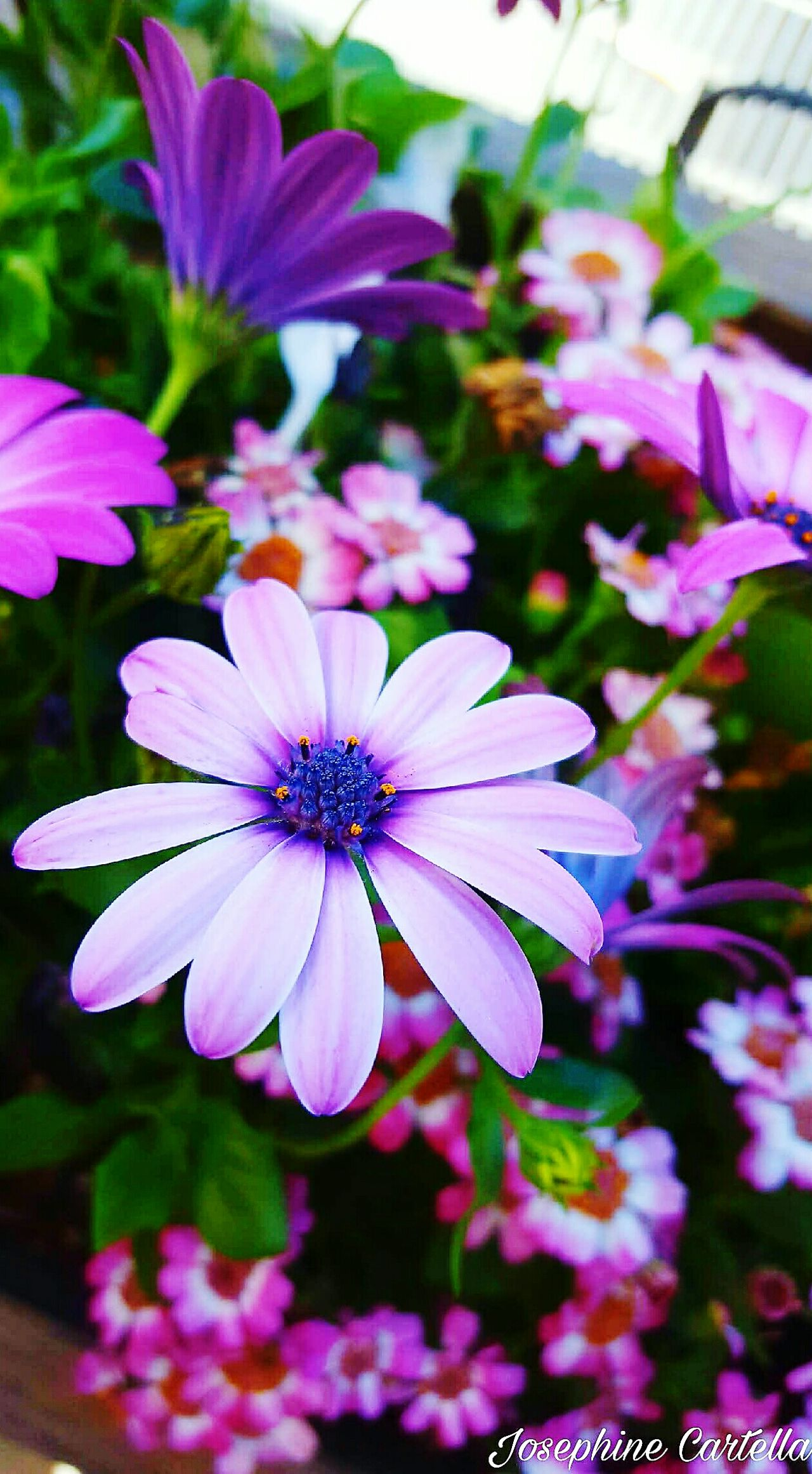 Flower Purple Pink Color Plant Fragility Nature Day Beauty In Nature Fiori Fioriprimaverili Fioridagiardino Fiori Colorati.. Fiorispontanei Fiori!!! Fioribelli Fiori Colori Colors Colour Of Life Colorsplash Colors Of Nature Color Of Life Colori Colorphotography Photography Freshness First Eyeem Photo