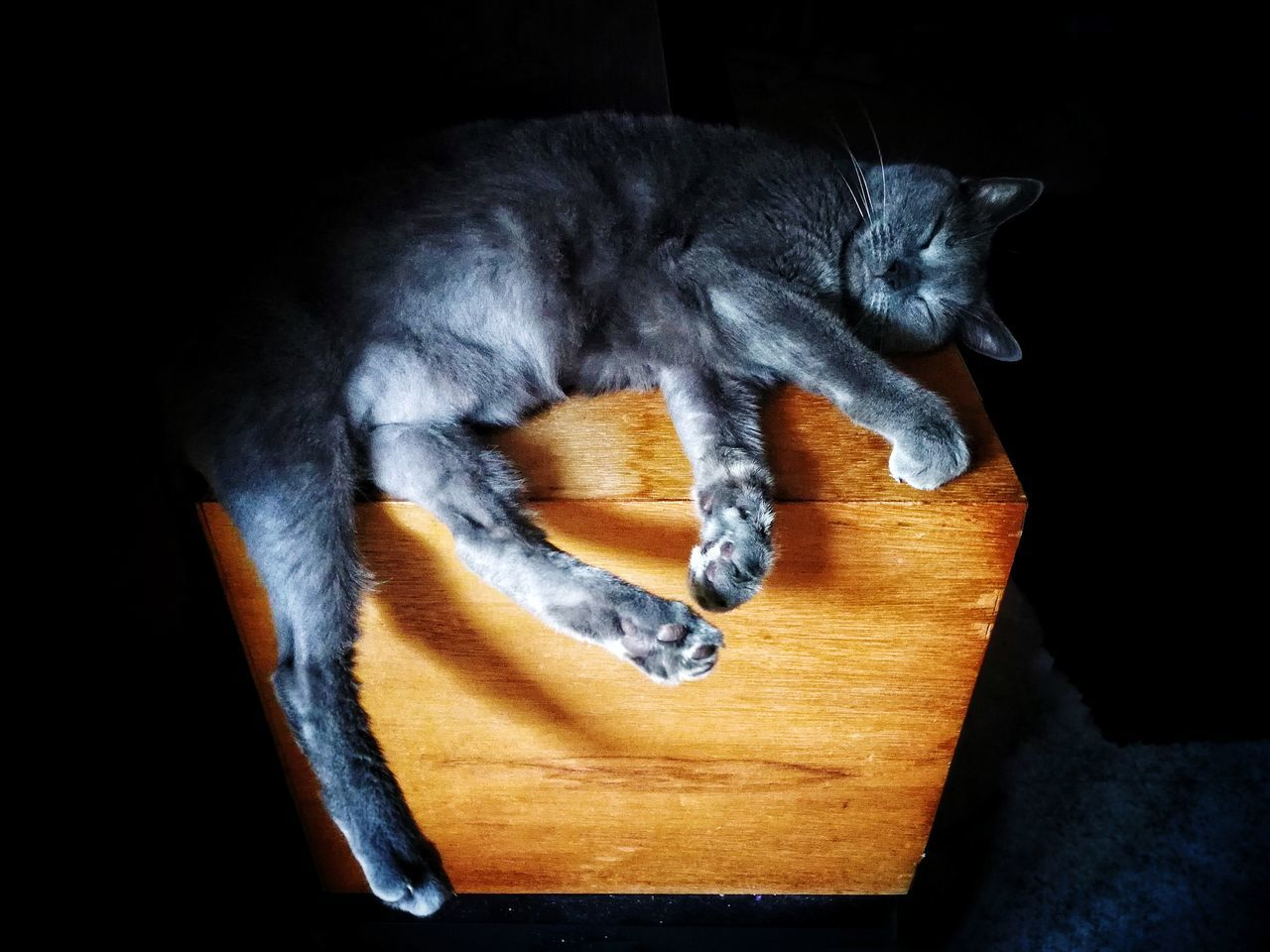 Sleeping cat 🌫️🐈🌫️ Animal Themes Mammal No People Indoors  Domestic Animals Cat Sleeping Sleeping Cat
