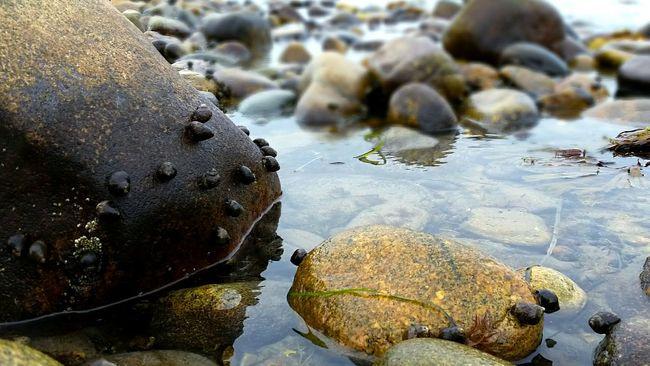 Snails on Rocks My Home Block Island 02807 Rhode Island Glistening Beach North Point