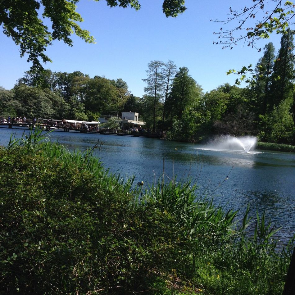 Inokashira park in Tokyo, Japan. Inokashira Park Japan Japan Photography Kichijoji Nature Sunny Tokyo Tree Water