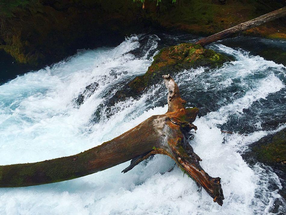 Waterfall Log River Water Energy EyeEm Nature Lover Hiking Odds Against Power Woods