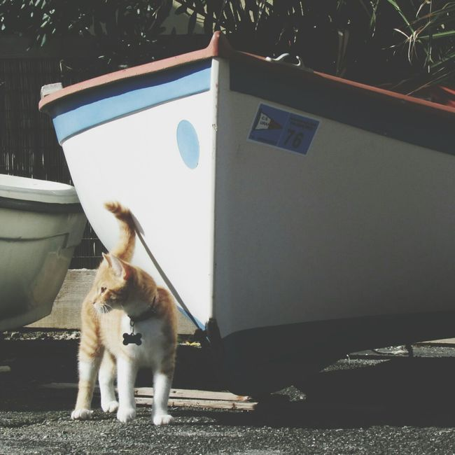 Steph Filter Streetphotography Pet Photography  EyeEm Best Shots