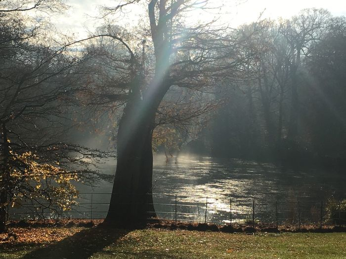 Bare Tree Beauty In Nature Branch Day Ham Stead Hamstead Heath Nature No People Outdoors Sunbeam Tranquility Tree Tree Trunk Water