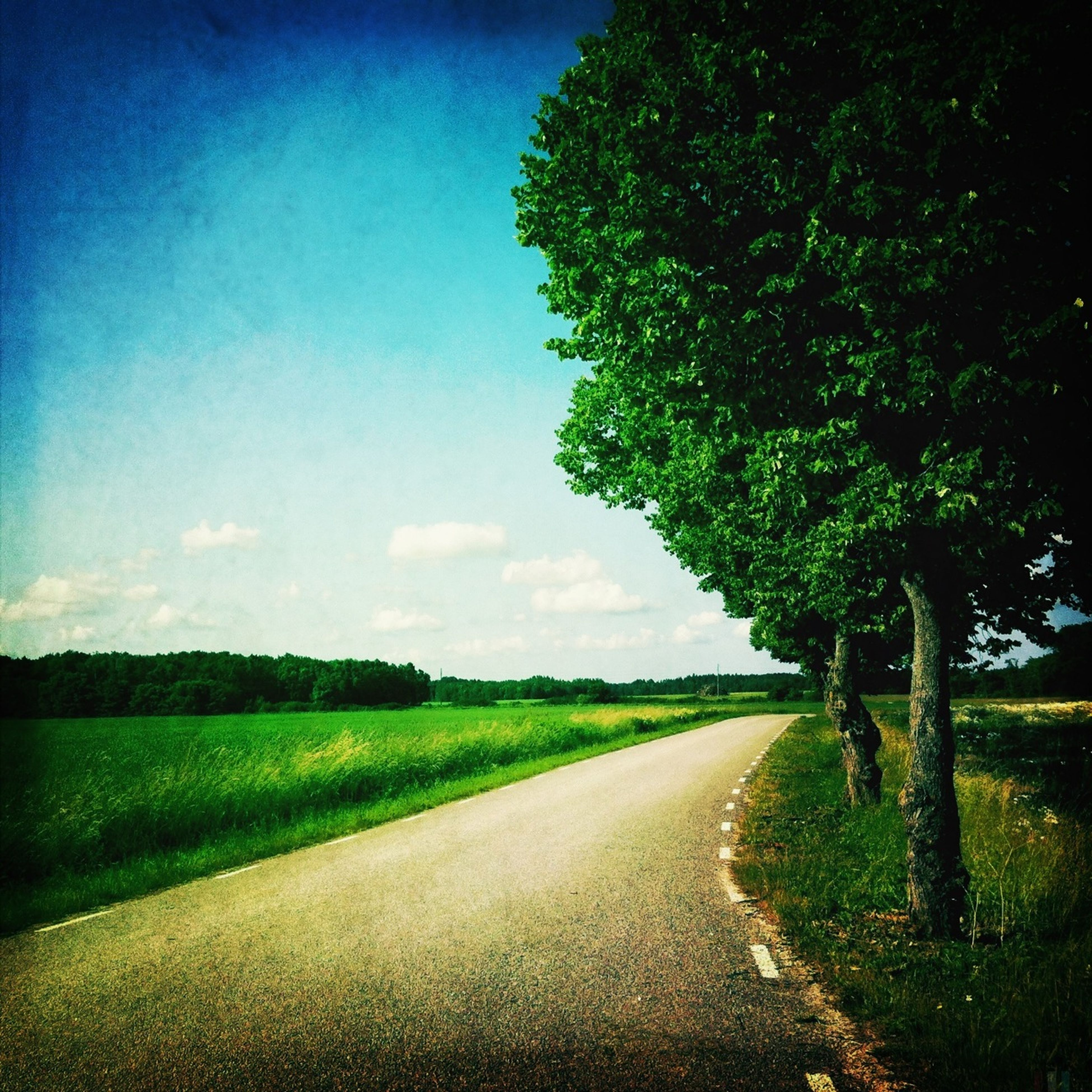 the way forward, tree, road, tranquility, tranquil scene, landscape, field, sky, country road, diminishing perspective, transportation, nature, grass, vanishing point, rural scene, growth, beauty in nature, scenics, empty, dirt road