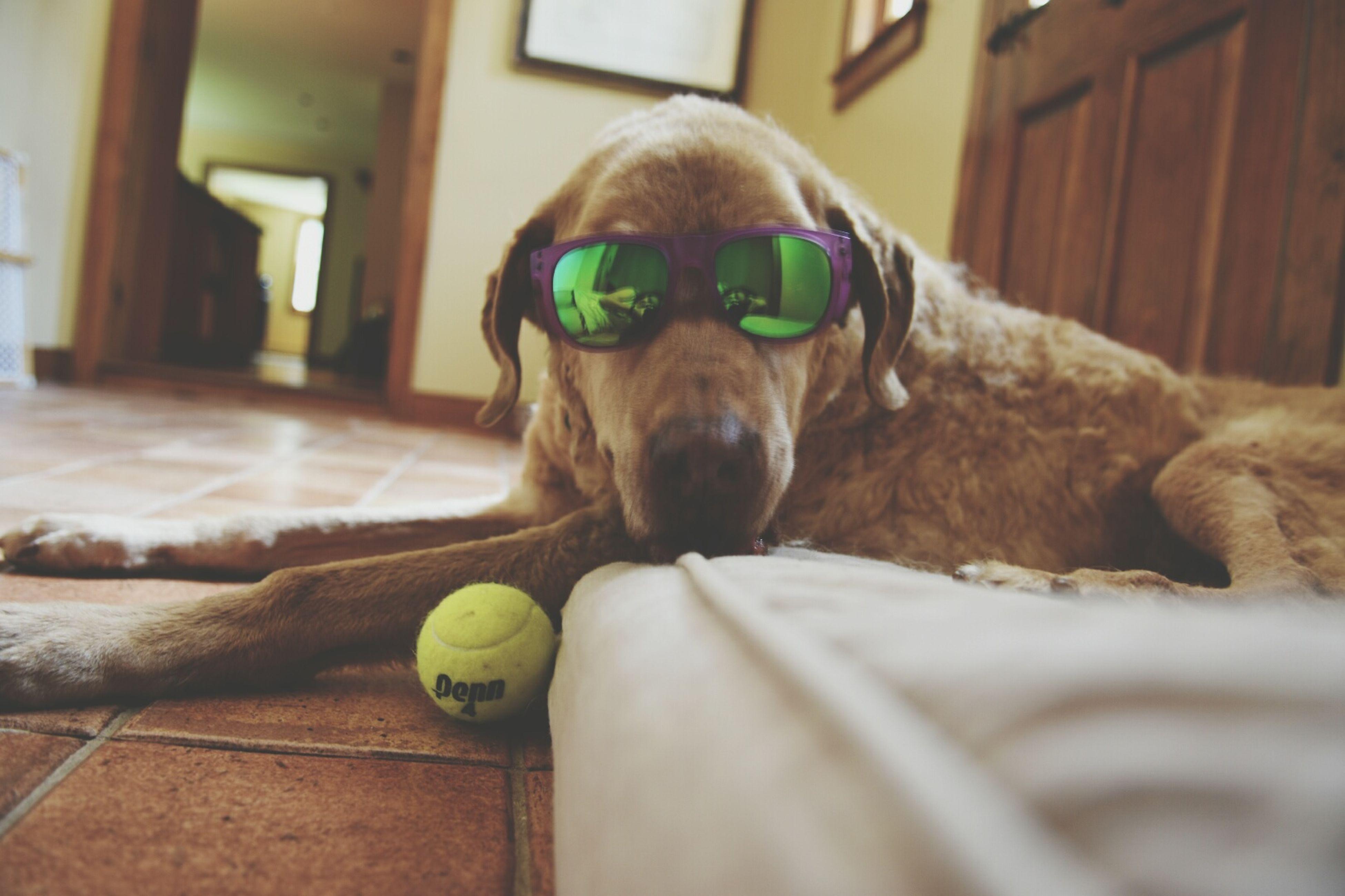 Mans best friend Chestnut Mansbestfriend Chesapeake Bay Retriever The Man The Myth The Ledgen Best Dog To Ever Live