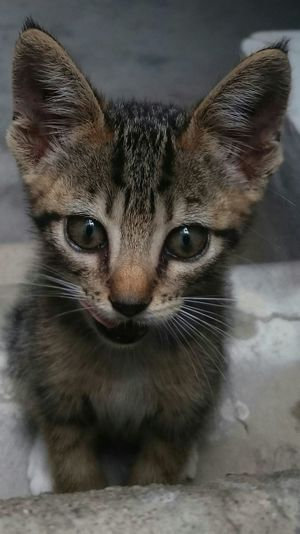 I met this girl and her sister abandoned on the the street....cruelty.....I am a looking for a decent home for them .They have no name , so welcome suggestions 😸😸😸 DPassos HUMANITY Cats Of EyeEm Abandoned Pet