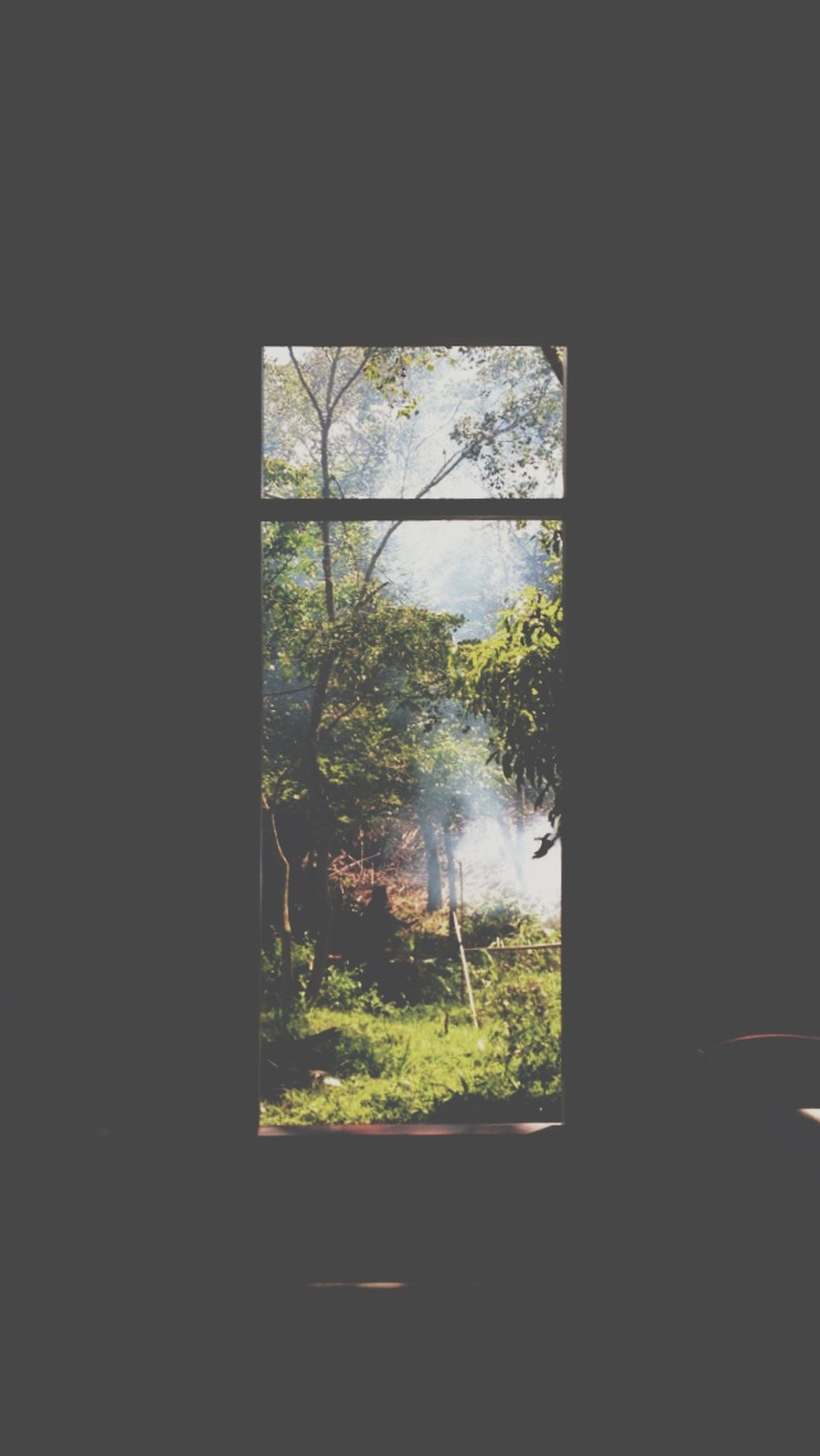 Forest House Enjoying Life Hanging Out Sunlight Window Nature Nature_collection EyeEm Nature Lover Naturelovers