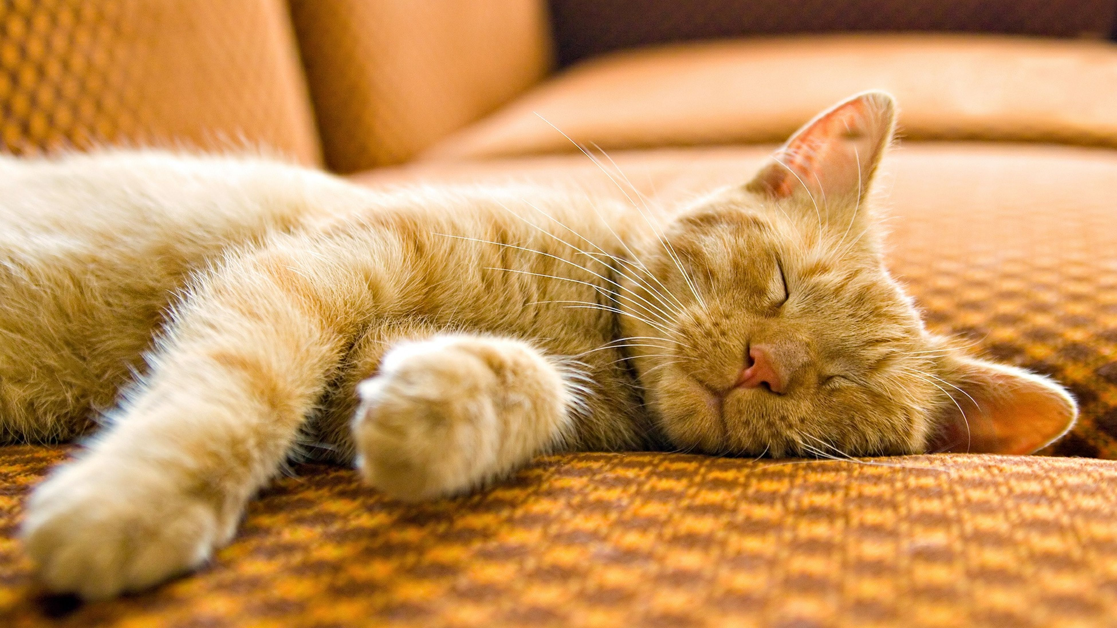 indoors, domestic cat, pets, domestic animals, relaxation, cat, animal themes, mammal, sleeping, resting, feline, one animal, lying down, whisker, close-up, bed, home interior, eyes closed, comfortable, sofa
