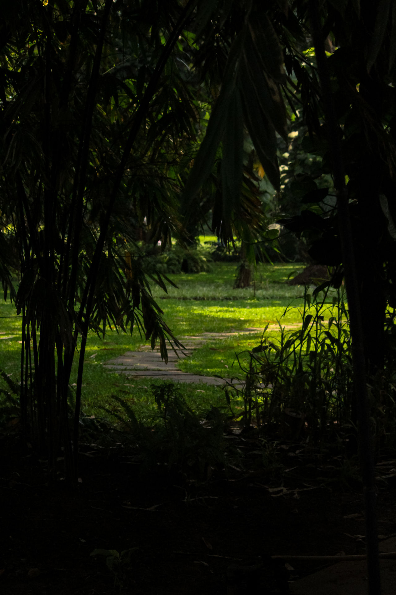 #Dark #green #light #myclick #Nature  #potrite Beauty In Nature Green Color Nature Outdoors