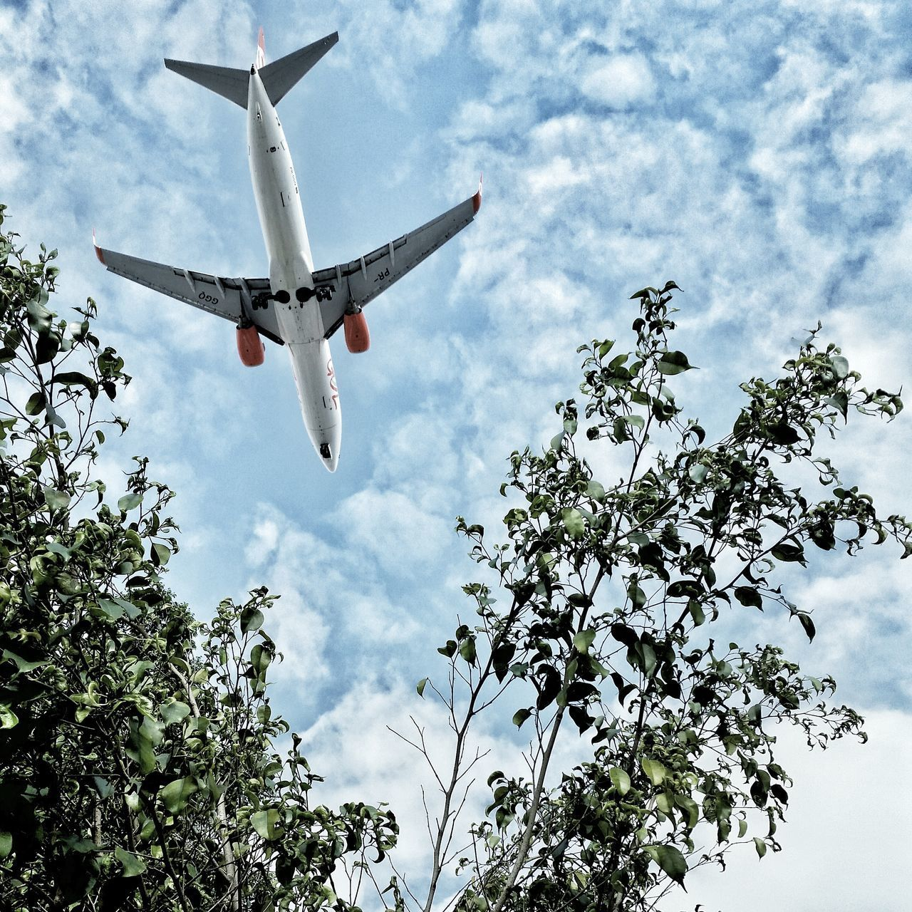 airplane, flying, sky, low angle view, journey, transportation, cloud - sky, travel, tree, no people, day, growth, nature, outdoors