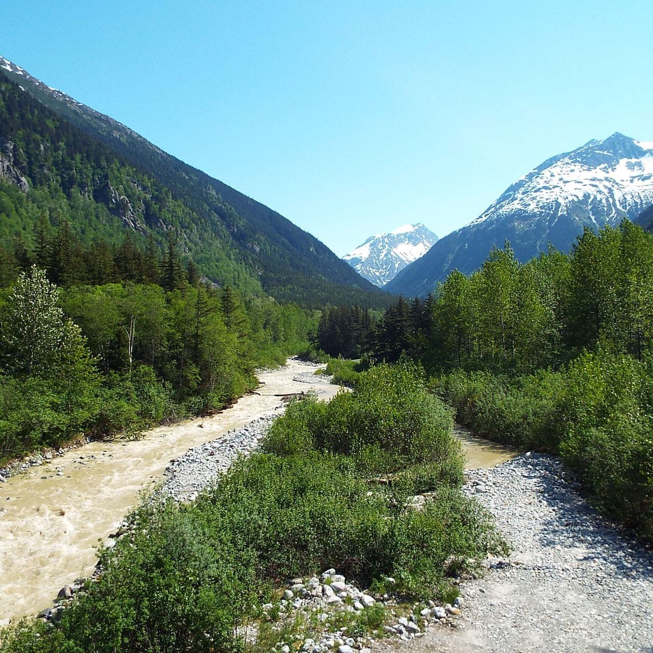 River of Silt Skagway Alaska Glacier Melt Mountain Tranquil Scene Tranquility Scenics Nature Beauty In Nature Mountain Range Tree Growth Road Green Color Landscape Clear Sky Day No People Outdoors Plant Winding Road Forest