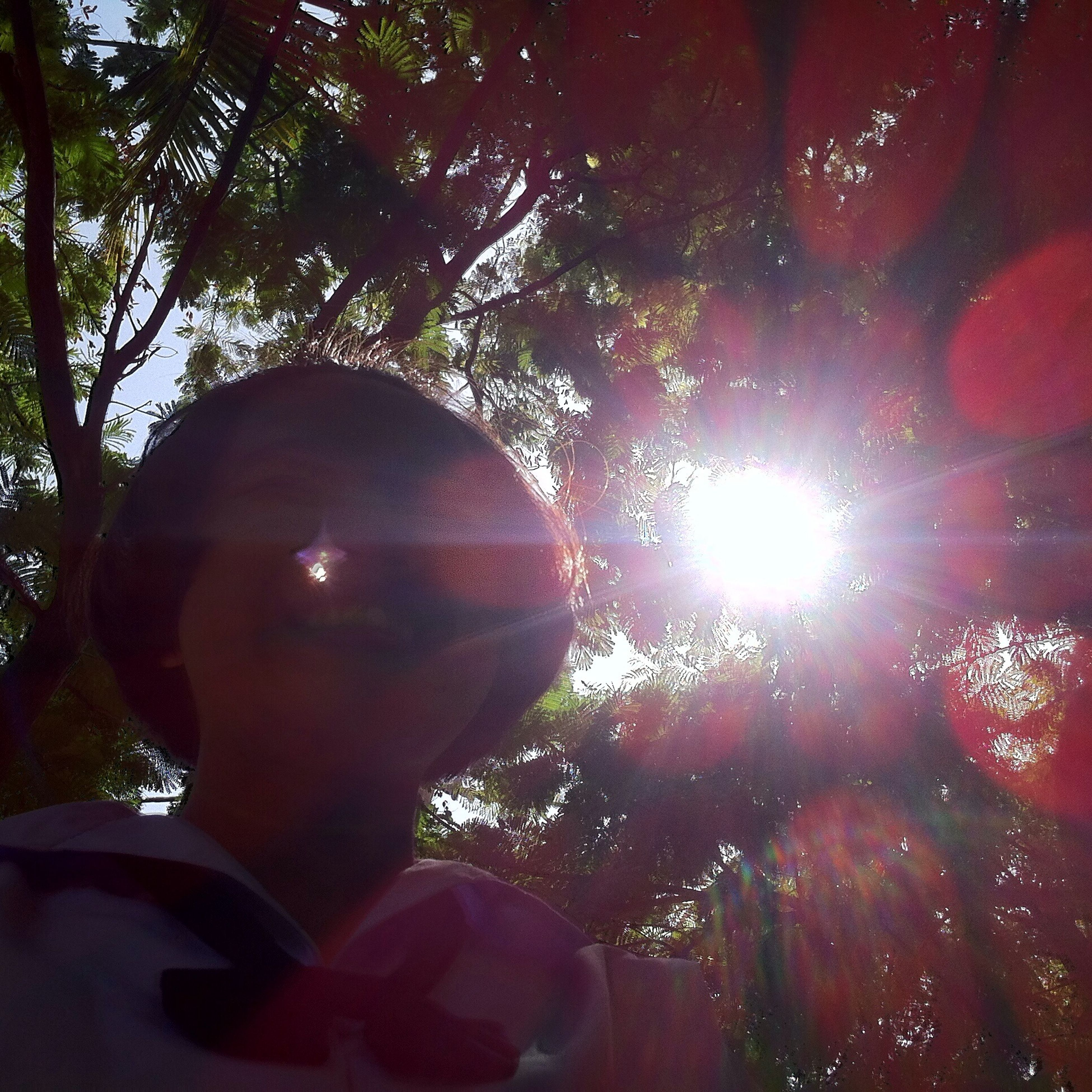 tree, lifestyles, leisure activity, person, holding, lens flare, sun, sunlight, men, sunbeam, personal perspective, unrecognizable person, part of, low angle view, headshot, cropped, sky