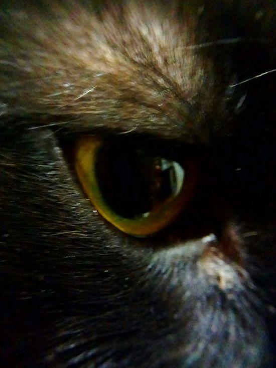 Eyes One Animal Animal Eye My Beautiful Cat! My Beautiful Cat🐈 My Cat Cat♡ I Love My Cat ❤ Domestic Animals Animal Themes 😻😻😻❤️ 😻my Sweety Cat😻 One Cat Beatiful Cat No People Domestic Cat I LOVE PHOTOGRAPHY Macro Eyes