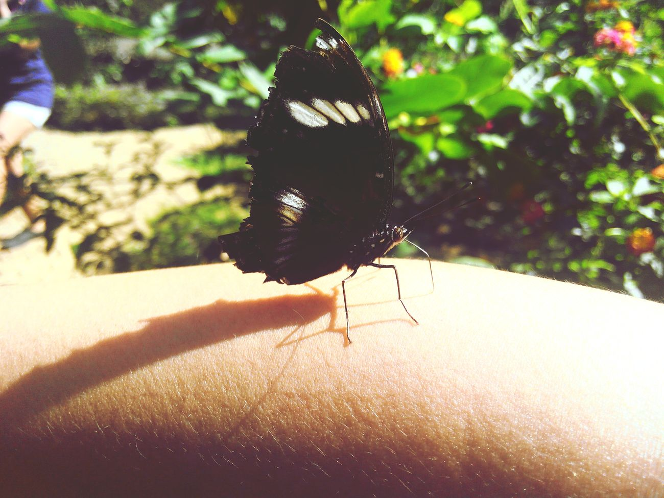 bam! perfect landing beautiful.. Butterfly ❤ Butterfly Collection Butterfly Garden Photography In Motion Nature Photography EyeEm Nature Lover EyeemPhilippines